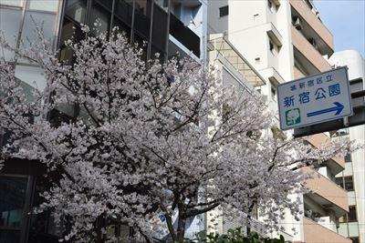 新宿花園・ゴールデン街 春の桜まつり 2016 は逃しちゃいけませんよ!